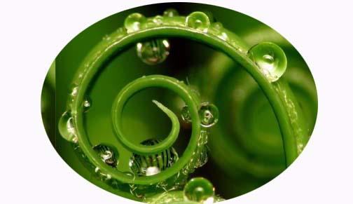greenspring1