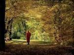 mindfulwalking